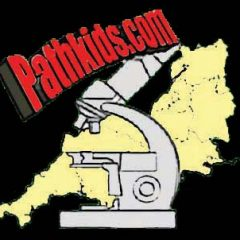 Pathkids.com website of the South West Pathology Trainees